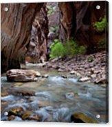 The Narrows, Zion National Park, Utah Acrylic Print