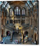 The Natural History Museum London Uk Acrylic Print by Donald Davis