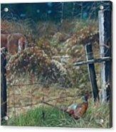 The Neighbor's Gate Acrylic Print