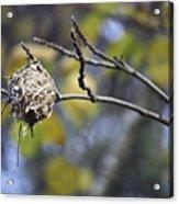 The Nest 2 Acrylic Print