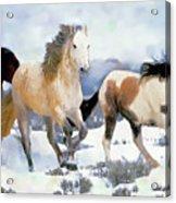 The Nevada Herd Acrylic Print