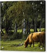 the New forest creatures Acrylic Print