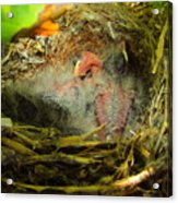 The Next Generation Hatched Acrylic Print