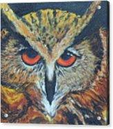 The Night Owl  Acrylic Print