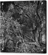 The Oak Acrylic Print