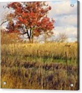 Red Oak Under November Skies Acrylic Print by Lori Frisch