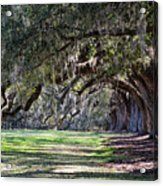 The Oaks At Boone Hall Acrylic Print