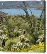 The Ocotillo View Acrylic Print