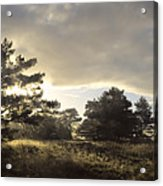 The Old Heath Acrylic Print