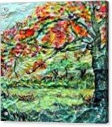 The Old Maple Tree Acrylic Print