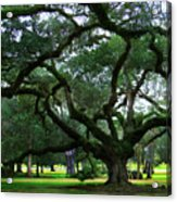 The Old Oak Acrylic Print by Perry Webster