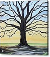 The Stained Old Oak Tree Acrylic Print