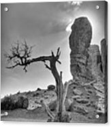 The Old Tree Acrylic Print by Andreas Freund