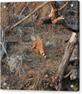 The Orange Iguana Acrylic Print