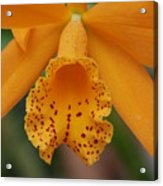 The Orange Orchid Acrylic Print