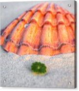 The Orange Scallop Acrylic Print