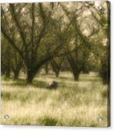 The Orchard Acrylic Print