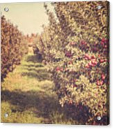The Orchard Acrylic Print by Lisa Russo