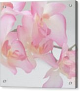 The Orchid Acrylic Print
