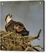 The Osprey Nest Acrylic Print