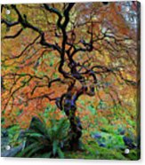 The Other Japanese Maple Tree In Autumn Acrylic Print