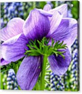 The Other Side Of Anemone   Acrylic Print