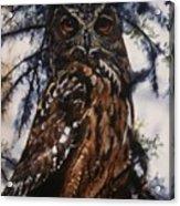The Owl Acrylic Print