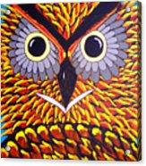 The Owl Stare Acrylic Print