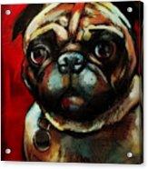 The Painted Pug Acrylic Print