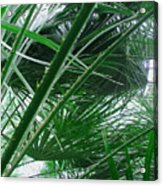The Palm House Kew England Acrylic Print