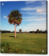 The Palmetto Tree Acrylic Print