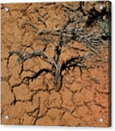 The Parched Earth Acrylic Print