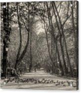 The Park Acrylic Print
