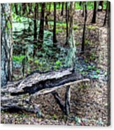 The Path By The Log Acrylic Print