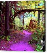 The Path Leads Ahead Acrylic Print