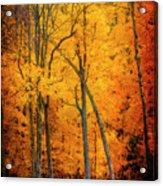 The Path To Autumn Acrylic Print
