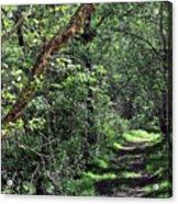 The Path We Walked Acrylic Print