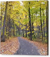 The Pathway To Fall Acrylic Print