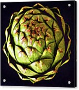 The Patterns Of The Artichoke Acrylic Print