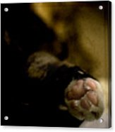 The Paw Acrylic Print