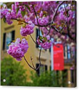 The Peabody Essex Museum At Spring Salem Ma Acrylic Print