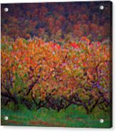 The Peach Orchard Acrylic Print