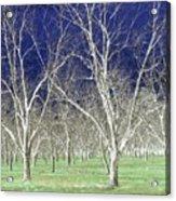 The Pecan Grove Acrylic Print