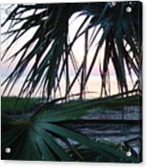 The Peeking Palms Acrylic Print