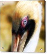 The Pelican Look Acrylic Print