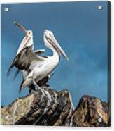 The Pelicans Acrylic Print