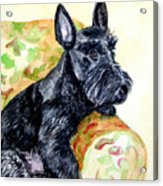 The Perfect Guest - Scottish Terrier Acrylic Print