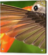 The Perfect Left Wing Of A Hummingbird Acrylic Print