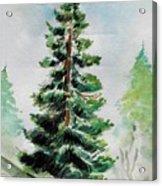The Pine  Acrylic Print