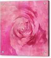 The Pink Lady 5 Acrylic Print